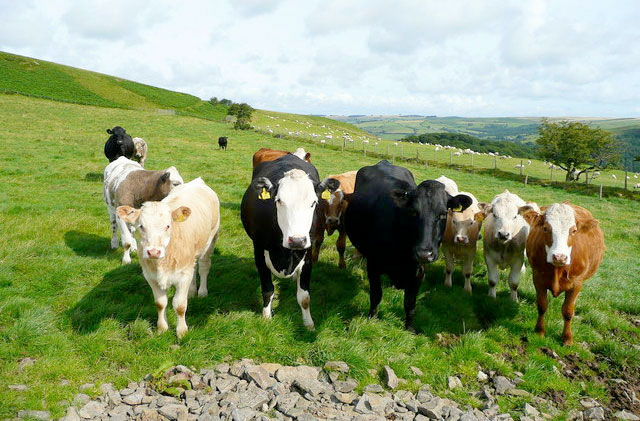 Beef price crisis harming farmer confidence, MPs told