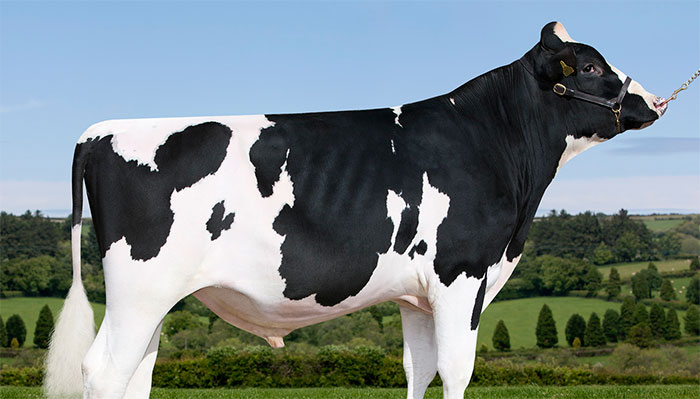 British-bred Holstein and polled no 2 for type joins Sterling Sires