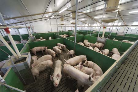New technology is enabling ARM to monitor thousands of pig places to determine costs and effects of ventilation on pig performance