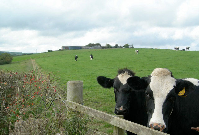 Milk price cuts causing 'lack of trust', says NFU