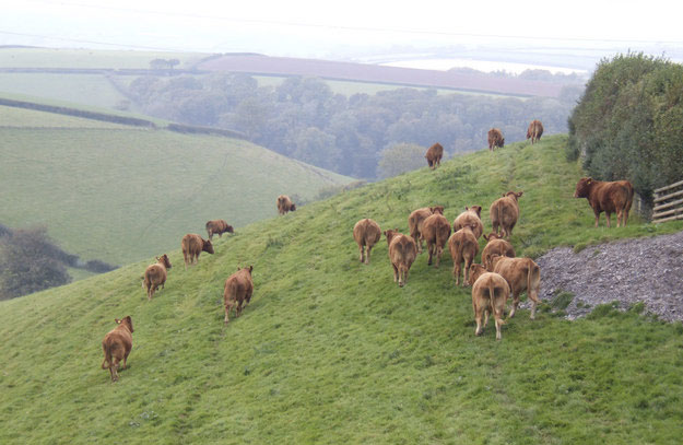 Beef promotion key to improved farm-gate price