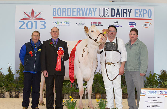 Top quality pedigree dairy holstein herd to be dispersed