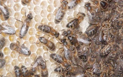 Public urged to help support our bees' needs