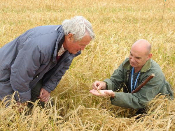 Maris otter barley, the secret plot for quality