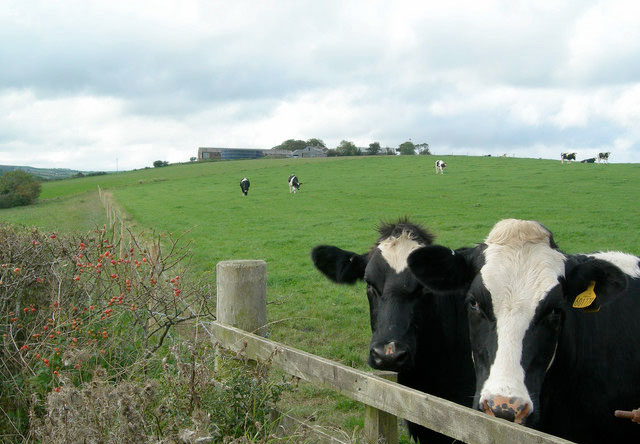 Improved confidence in the dairy sector