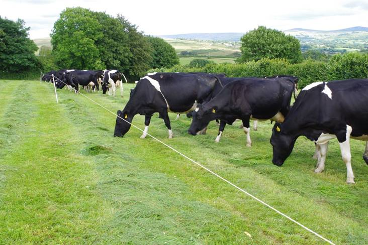 More milk from grass: av 5,900 litres with no cake