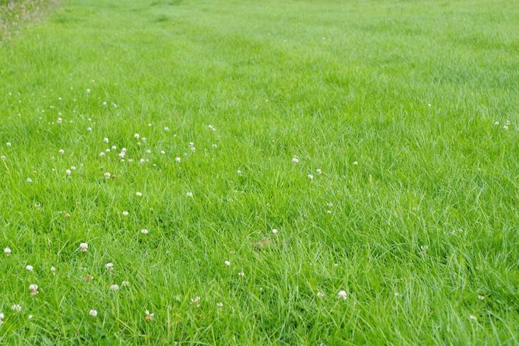 The mown swards are thick and have few weeds. Docks remain a problem