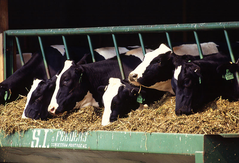 Dairy companies cut price paid to farmers