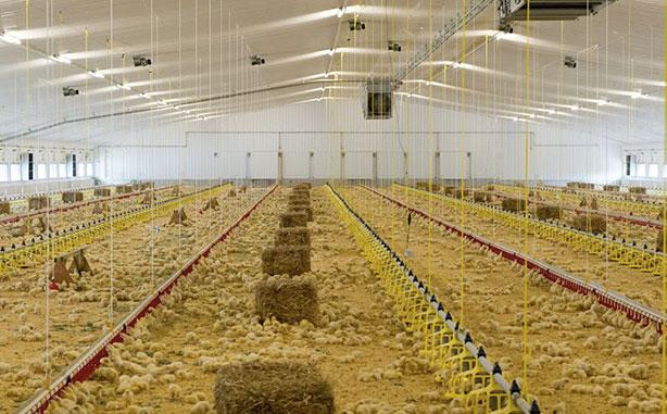Russian ban won't derail bullish poultry...