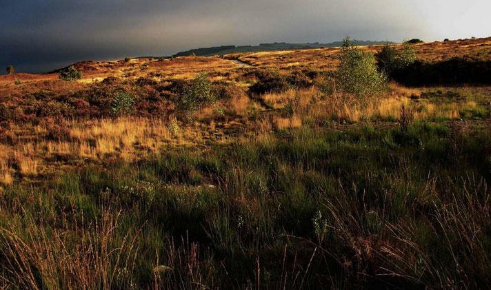 Grazers return to nature reserve