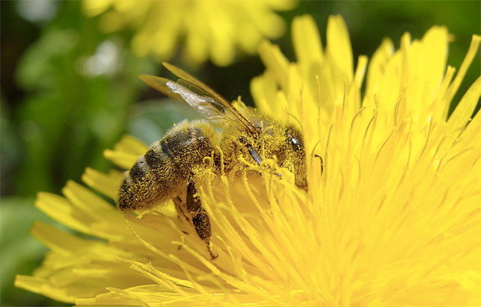 Underestimated effects of neonicotinoid ban