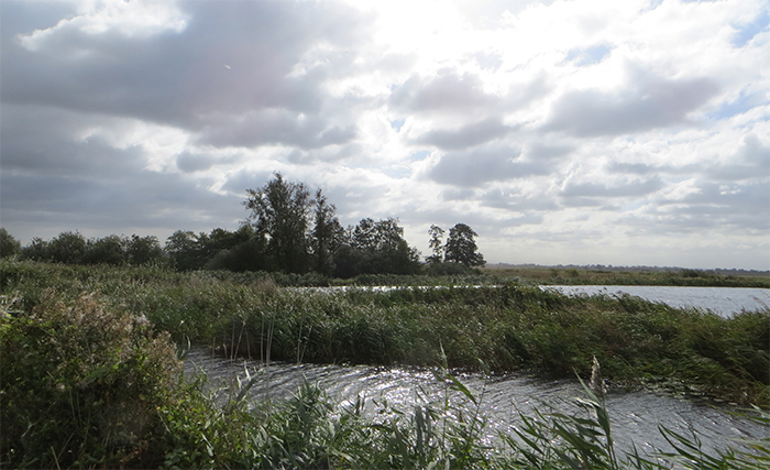 Wetland is more valuable than arable, ne...