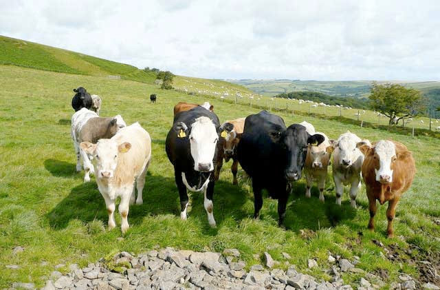 Smaller European markets drive beef export growth