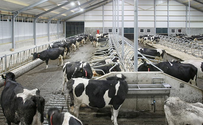 Manage dairy price volatility by 'promot...