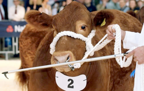 2015: The year ahead for the beef market