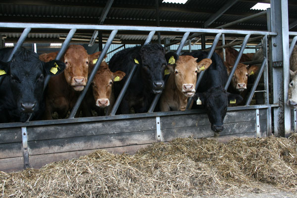 Lancashire Beef Unit Benefits From Complete Diet For