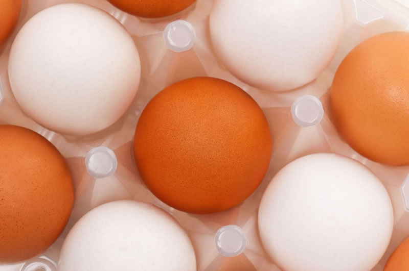 UK egg producers help ease American egg crisis