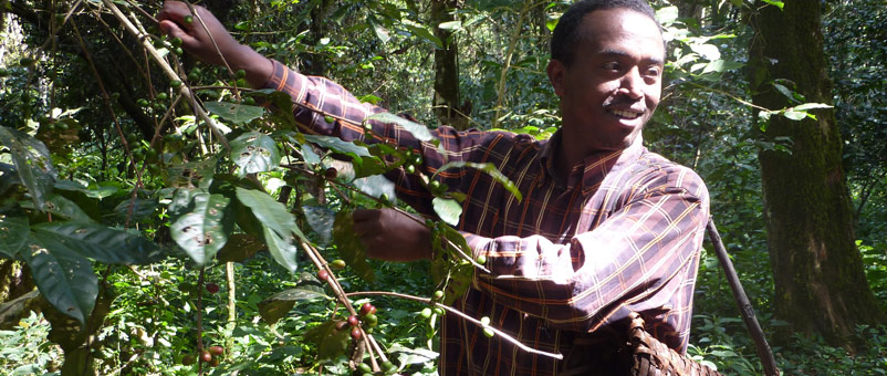 Farm Africa introduced PFM to replace command and control approaches to protecting forests and rangelands