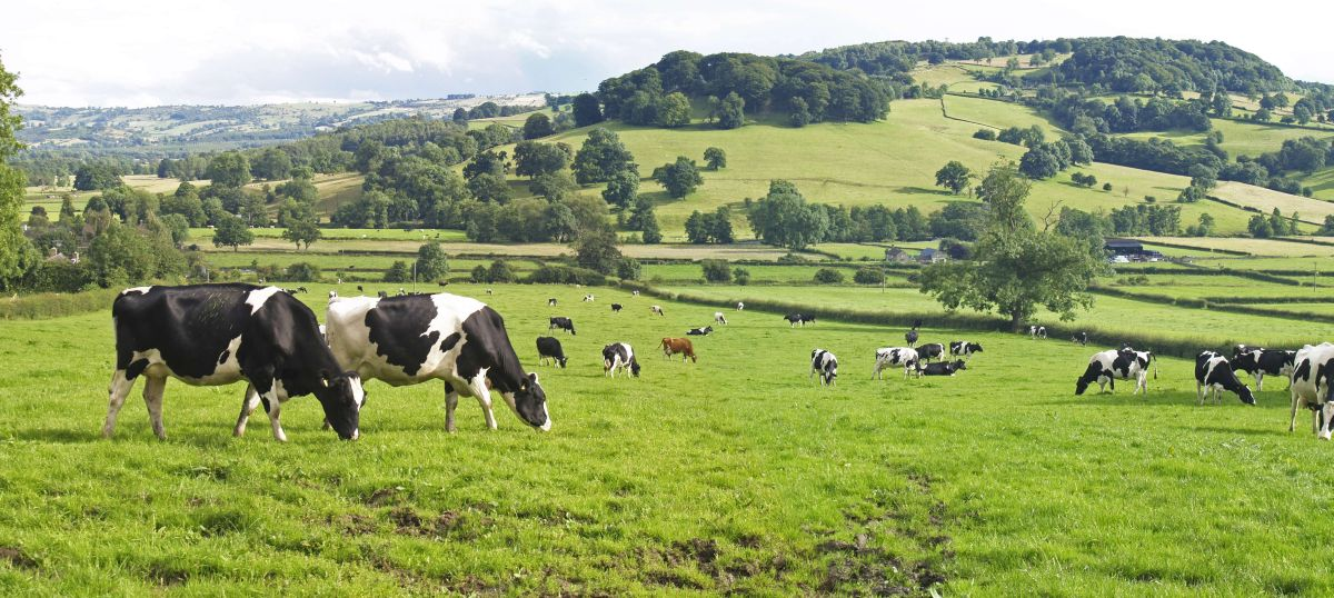 £4.7M for science to benefit British farming