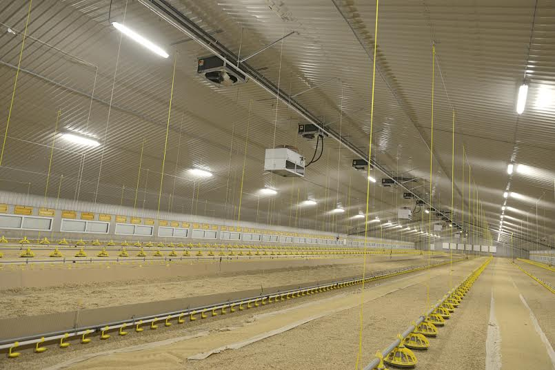 Are climate control computers the answer to modern poultry farming challenges?