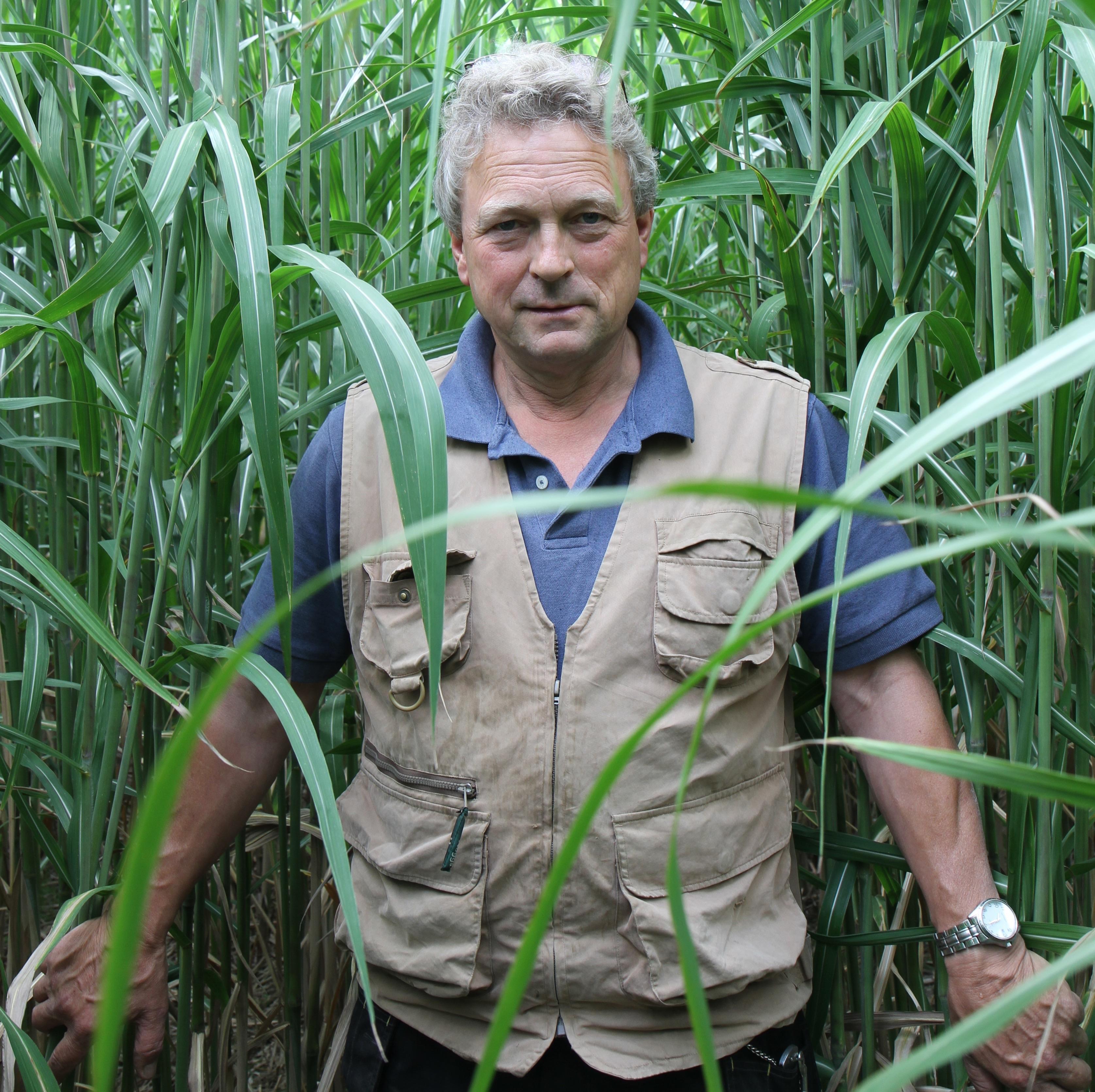 Norfolk farmer showcases miscanthus crop thriving on barren land
