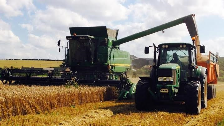 An organic crop of Revelation wheat has yielded an astounding 9.9t/ha