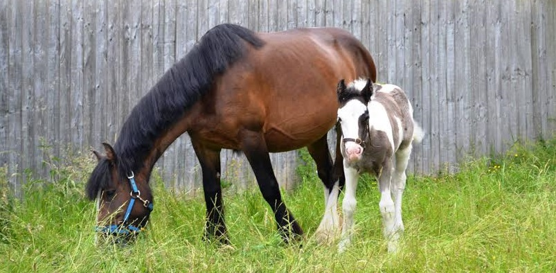 Two rescue horses feature in new charity campaign
