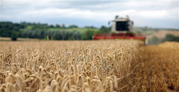 Record wheat harvest underlines importance of markets for crops