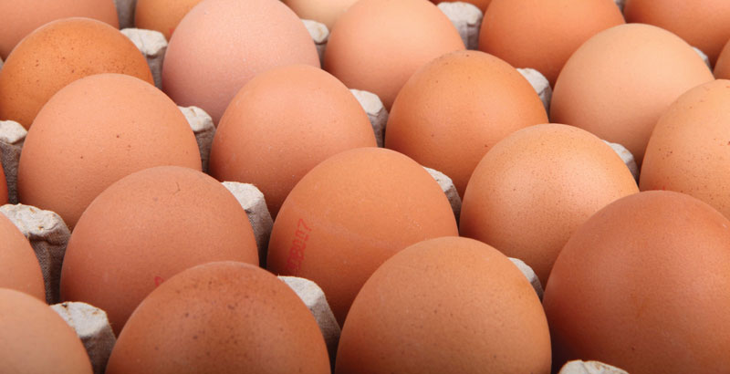 Spanish egg market in financial crisis