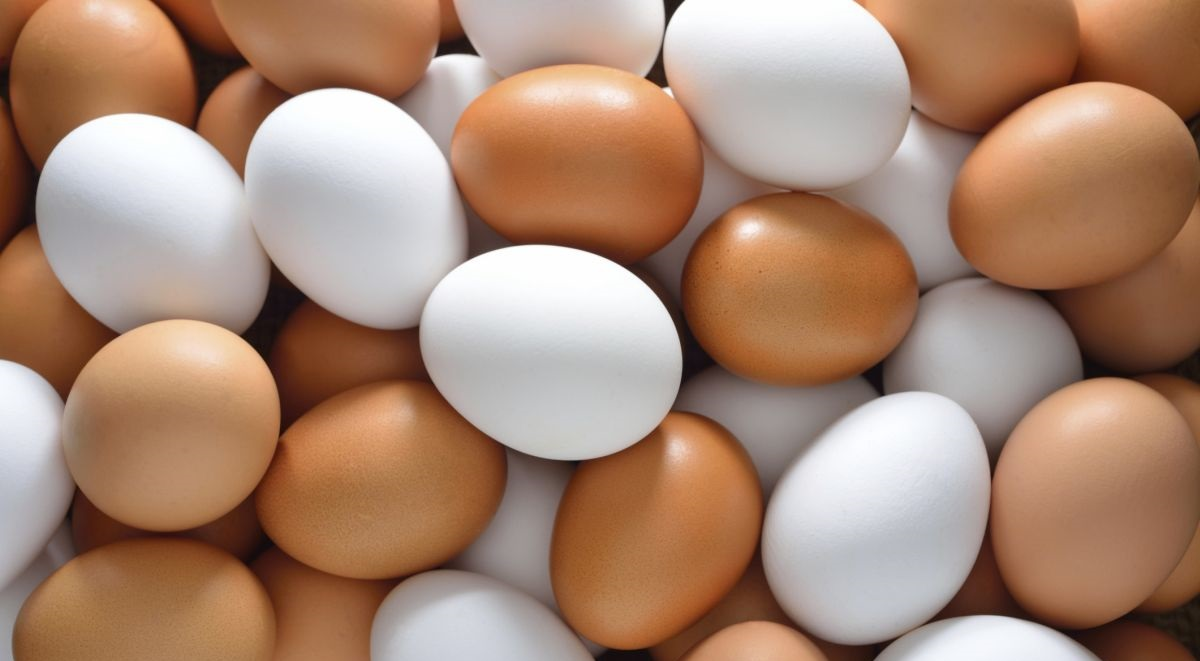 Norfolk egg farm to become first self-sustainable unit
