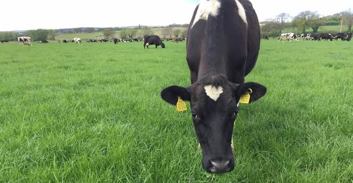'Persistency and palatability key to 2016 grass success'