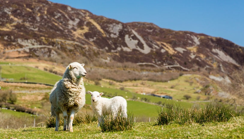 'Welsh food and farming sector can capitalise on opportunities that will arise in 2016'