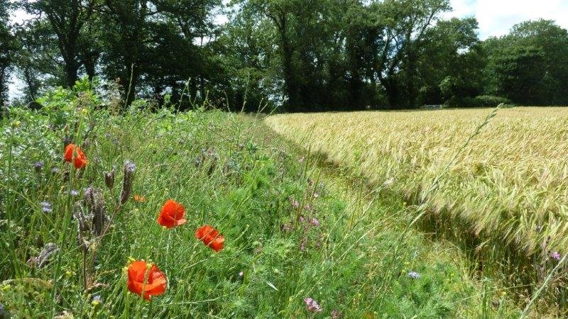 20,000 hectares of natural habitat have been restored thanks to £7.5m project
