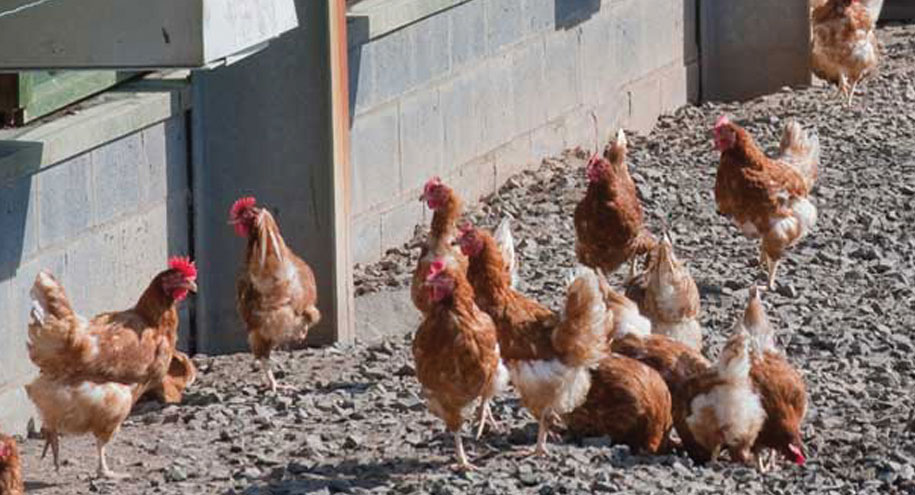 Poultry conference shows how to reduce antibiotic use