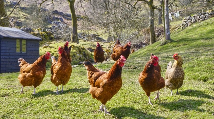 Containing animal disease outbreaks: agriculture MEPs endorse deal with Council