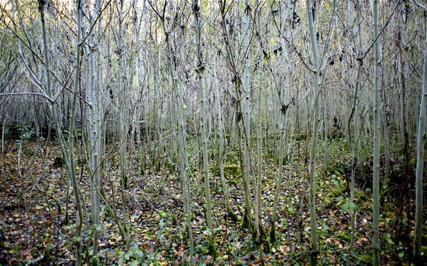 Farmers have chance to access government funding to restore diseased woodland