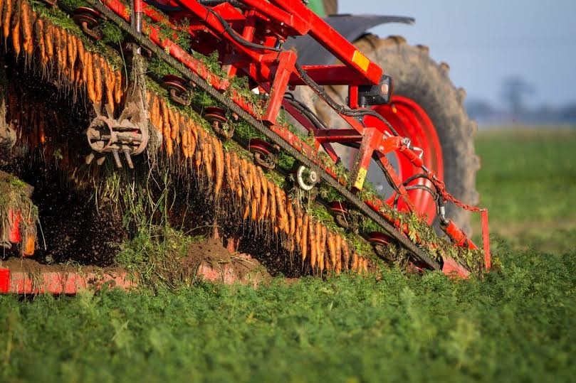 Growers can't underestimate threat from soil pests