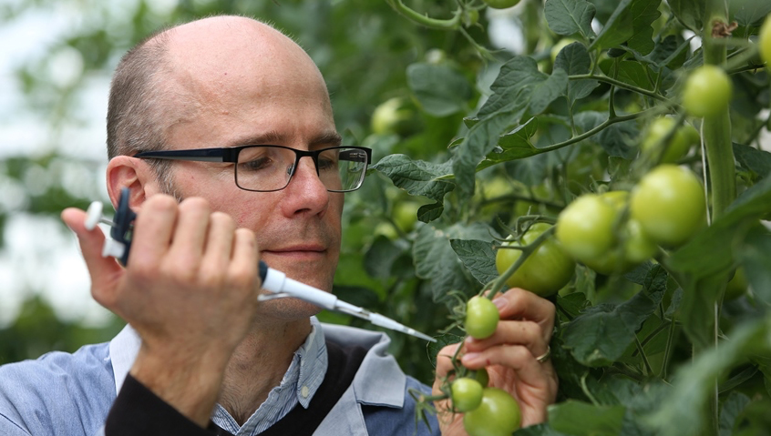 £2m investment in plant science to help scientists tackle pests and diseases