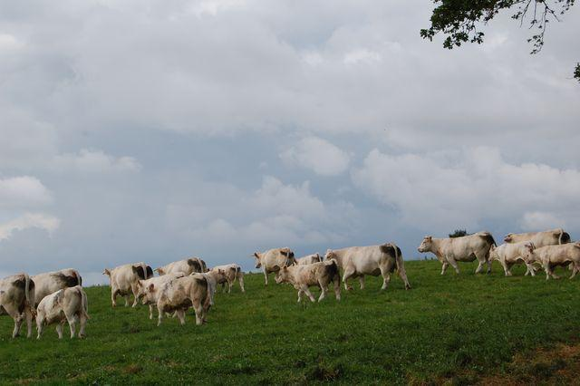 Careful mineral management needed at turnout