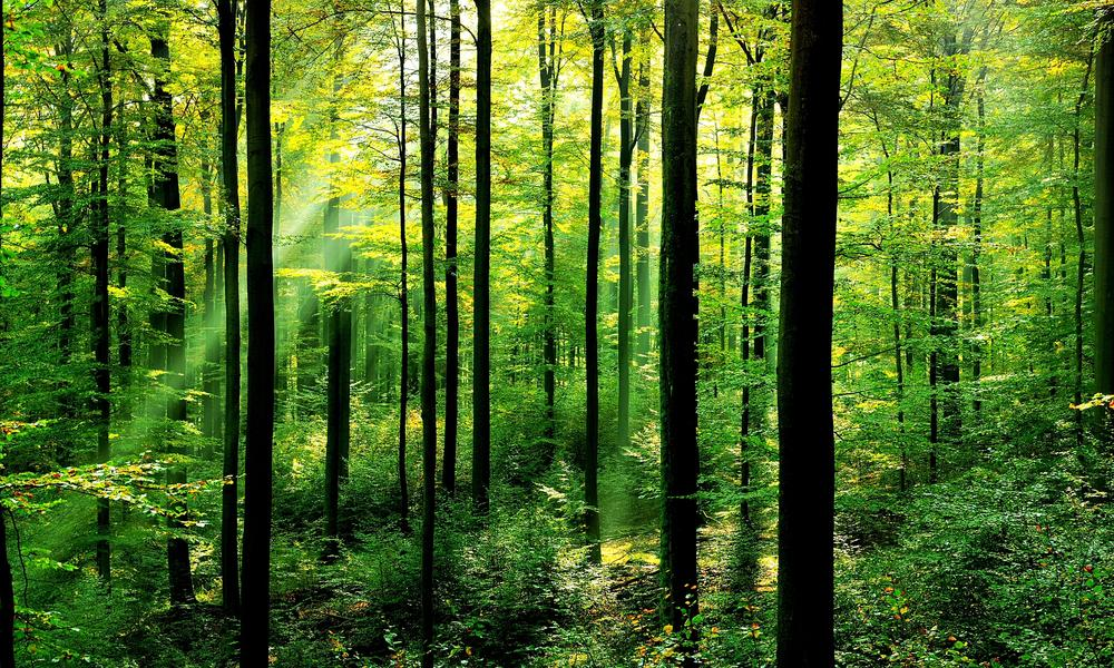 Scotland needs more trees to secure £1bn forestry and timber industry