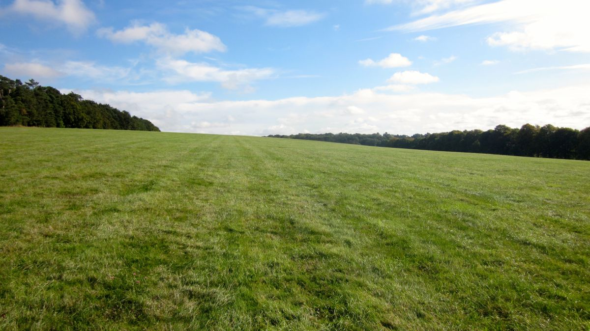 Farmers must address the root of the problem when growing grass