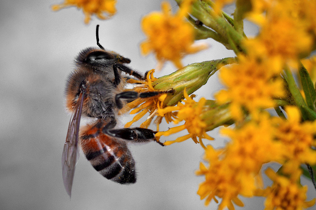 French parliament votes for 'outright ban' on neonicotinoid use