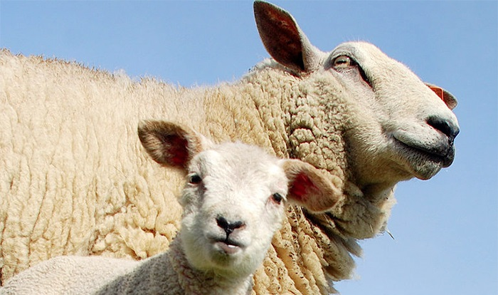 Need for an agreed disease strategy amid mounting bluetongue risk