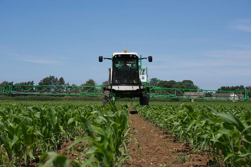 Early removal of competitive weeds from maize crops is important