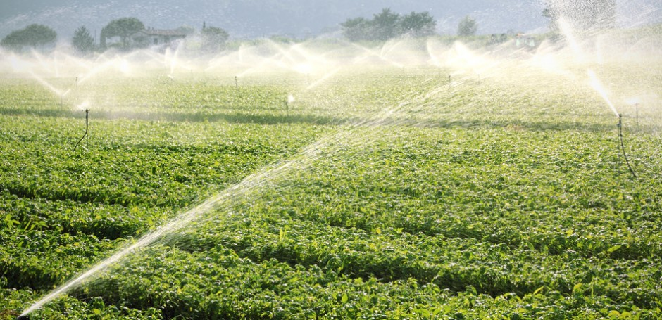 NFU stresses importance of horticulture's access to water as government considers regulations