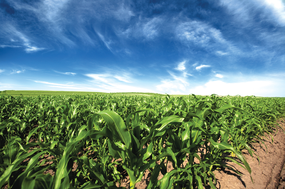 Sustainable Food Farming Jobs Uk