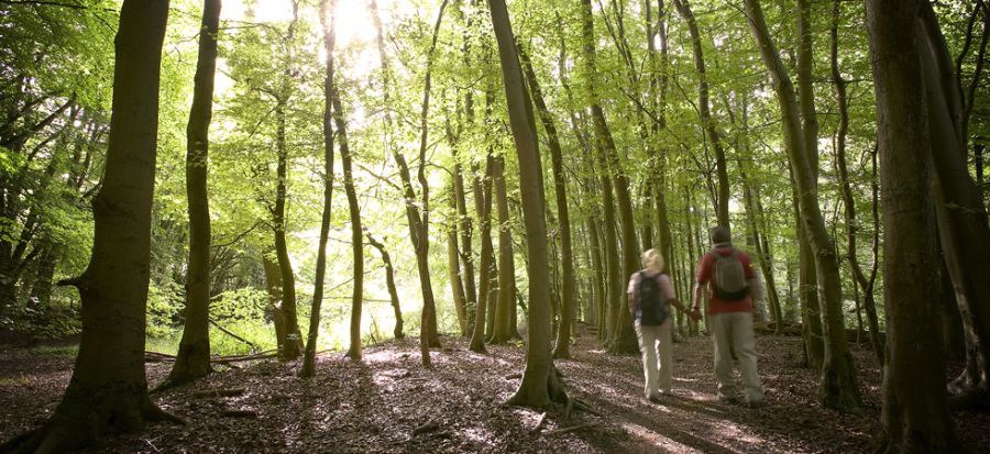 Would Brexit be good for forests?: 48% of sector would like to leave, according to poll