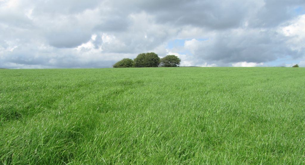 Versatile grass mixture provides grazing and silage on Somerset dairy