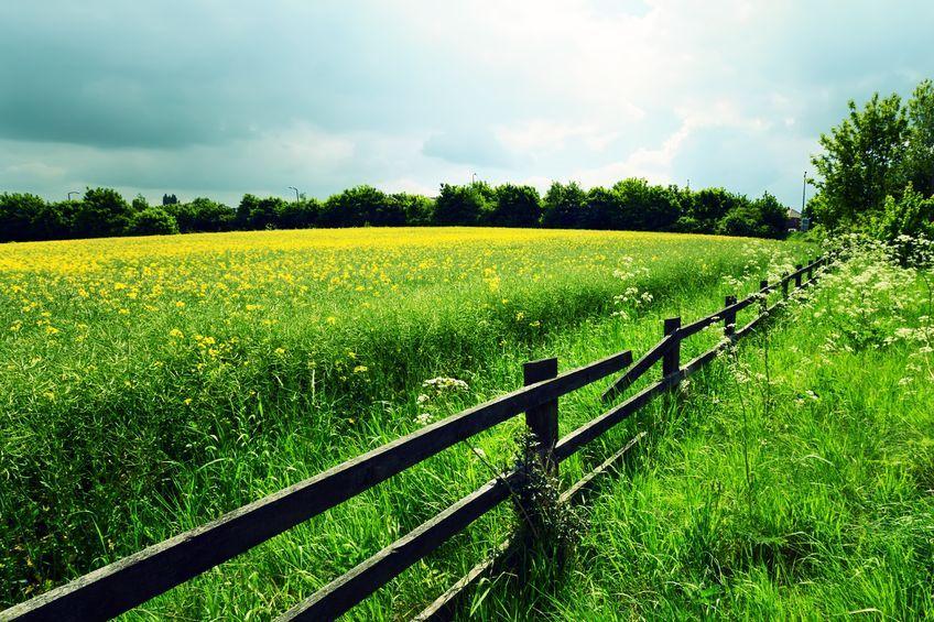 Scottish farm rents rises three per cent, new figures show