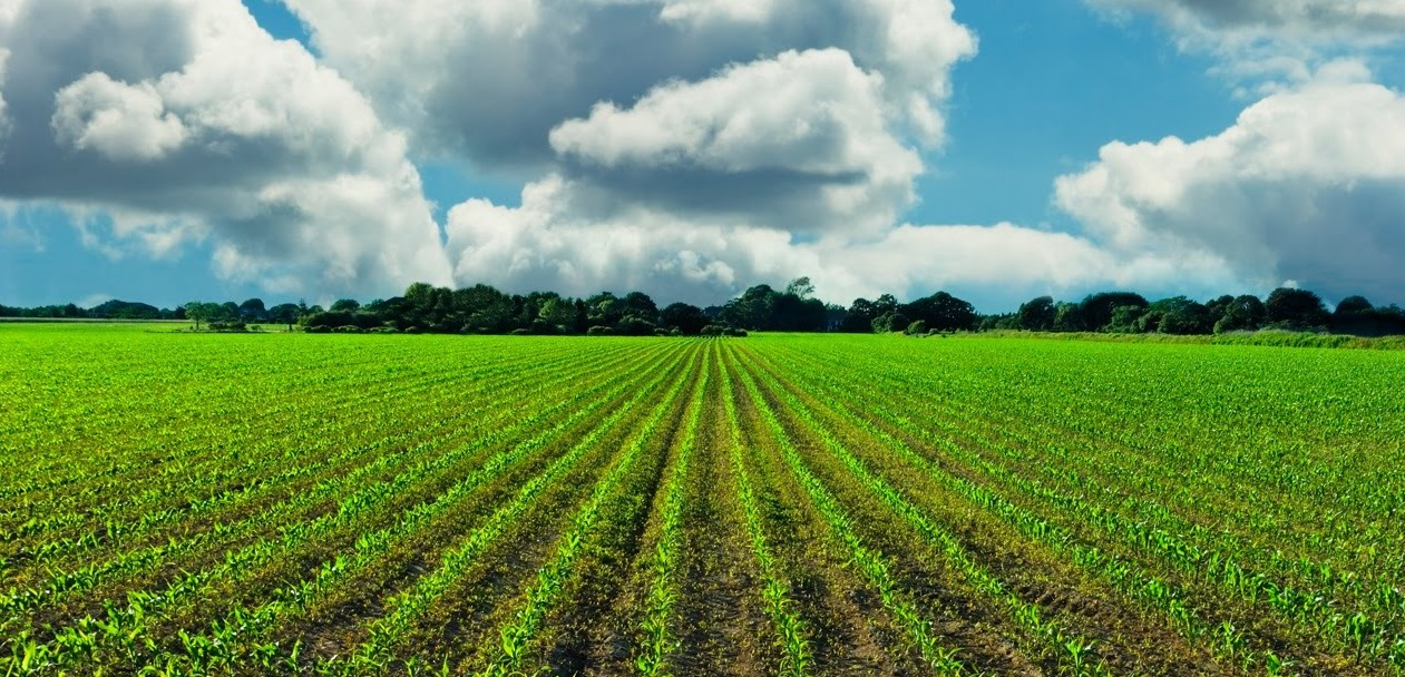 LEAF calls on industry to play its part in sustainable farming
